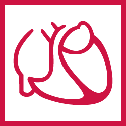 German Cardiac Society